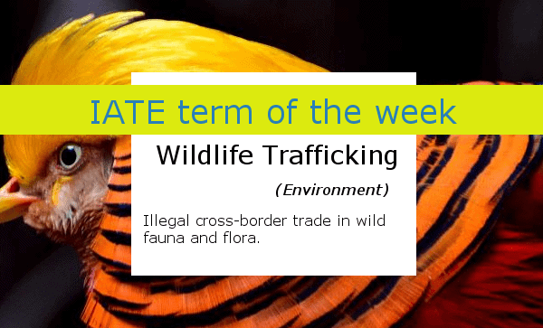 IATE_term_of_the_week_wildlife trafficking
