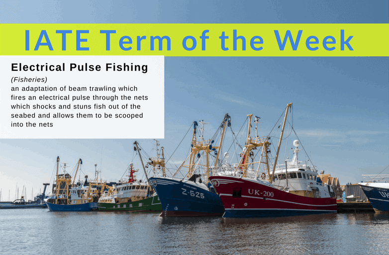 Fishing Term of the Week