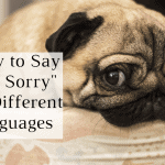 I'm sorry in different languages
