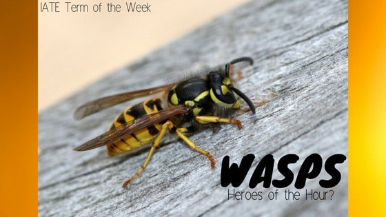 Wasp banner latest